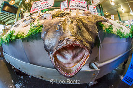 Ugly Monkfish Ready to Jump at Unsuspecting Tourists in the Pike Plae Market