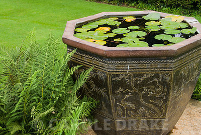 Decorative oriental container with pygmy waterlily. Melplash Court, Bridport, Dorset, UK