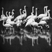 7479-Bird_Laurent_Baheux
