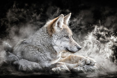 Art-Digital-Alain-Thimmesch-Loup-52