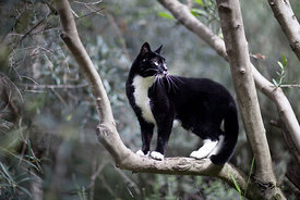 ACutting_cat_branch_0762