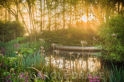 Dawn sunlight breaks through mist and trees above the pond with moored canoe, surrounded by magenta Primula pulverulenta, ferns, irises, sedges and bamboo. Windy Hall, Windermere, Cumbria, UK