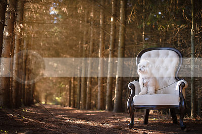 small white dog sitting on an antique chair in the forest