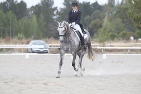 SI_Festival_of_Dressage_310115_Level_6_7_MFS_0844
