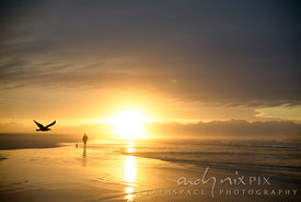 Man walking on the beach with his dog at sunrise, seagull flying in front