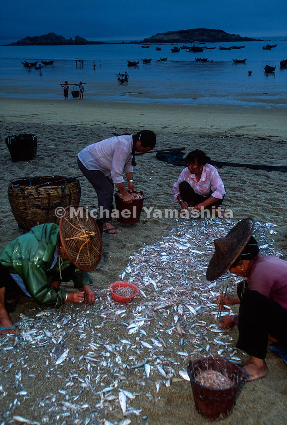 One of the four remaining fishing villages on the island. Women & children sort small fish from shrimp with chopsticks. .Bai Dai Village, Vietnam