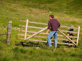 Closing a field gate.