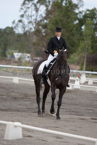 SI_Dressage_Champs_260114_002