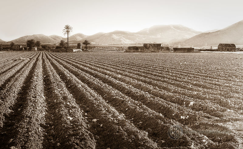 Spain - San Javier (Plowed Field II)
