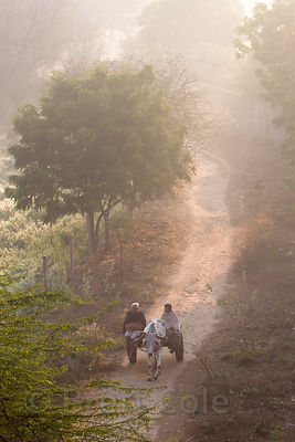 Farming couple drive their ox cart down a country lane at sunrise, Saradhana, Ajmer, Rajasthan, India. Seen from a nearby mountain.