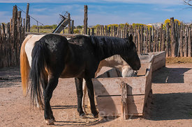 Horses and Trough at Hubbell Trading Post