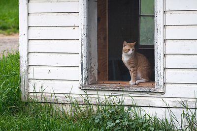 A cat in the window of a farmhouse in New York State