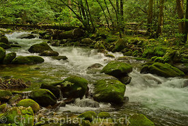 Another beautiful image of Porter's Creek which makes for a great large print.