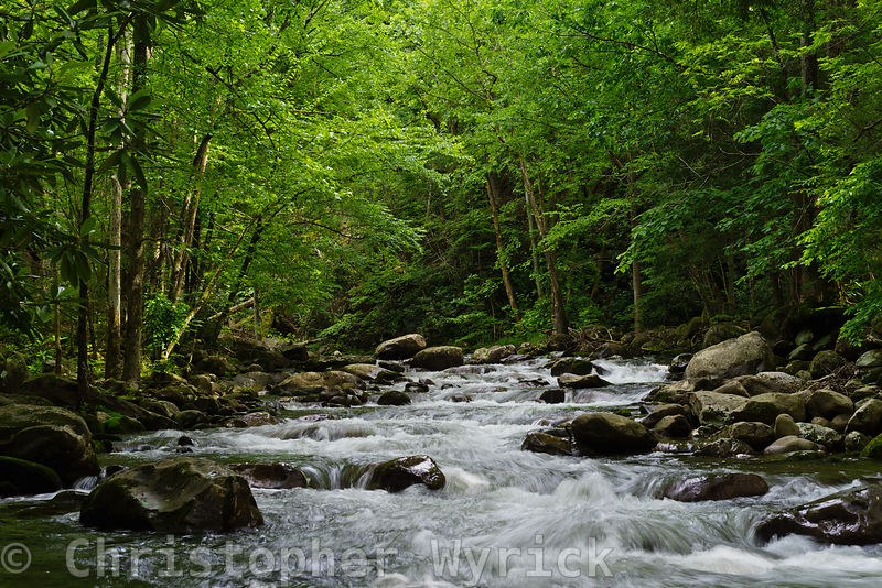 A pretty photograph from the middle of Porter's Creek looking upstream.  Gorgeous details highlight this image.