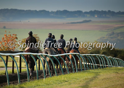 Lambourn Gallops  photos