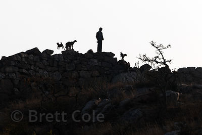A goat herder atop the highest point in the entire Pushkar region, in the Aravali mountains near Leela Seori, Rajasthan, India