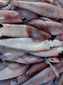 Fresh Squid displayed at a market stall.