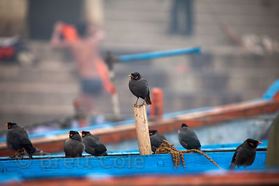 Birds (sp.) on a boat on the Ganges River, Varanasi, India.
