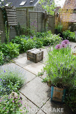 Brigit Strawbridge's tiny bee friendly courtyard garden in St James', Shaftesbury, planted with wildlife in mind, particularly bumble and solitary bees. Insect friendly plants include alliums, chives, centaurea, forget-me-nots and hardy geraniums.
