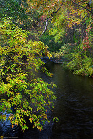 Fall Colors in Bidwell Park, #11