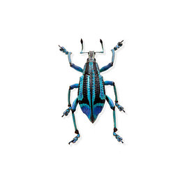 2Bug_Weavil_0677