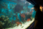 Oceanarium, Bayworld, Port Elizabeth, South Africa