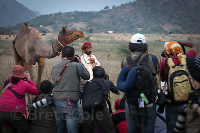 A group of Japanese photographers in a staged shoot during the Pushkar Camel Fair, Pushkar, Rajasthan, India. Japanese photographers in particular are the subject of frequent and widespread complaints by Indians for their behavior and approach to photographing while in India.