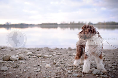 brown and white scruffy dog standing on beach