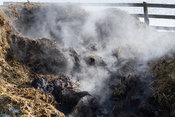Steam rising off manure rotting in a midden heap, Yorkshire, UK.