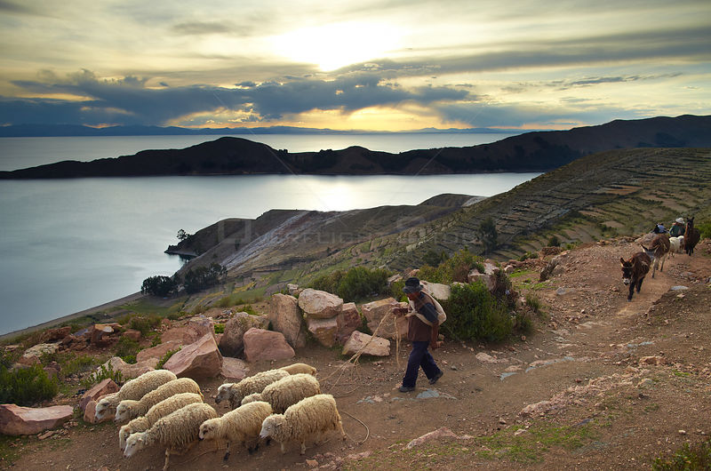 Farmer with his sheep on the Isla del Sol, Lake Titicaca, Bolivia, December 2009