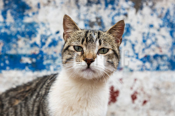 Portrait of a Cat in the Fishing Port