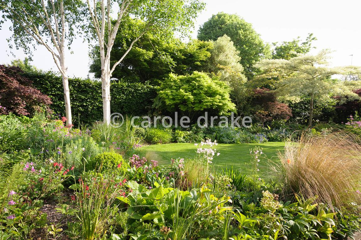 Lawn In The Front Garden Is Surrounded By Densely Packed Borders And  Includes Several Small Trees Including Cornus Controversa U0027Variegatau0027,  Acers And White ...