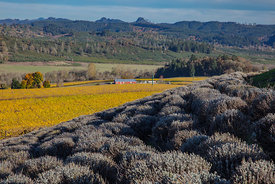 King_Estate_Oregon-6894