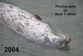 Front Cover - Harbour Seal
