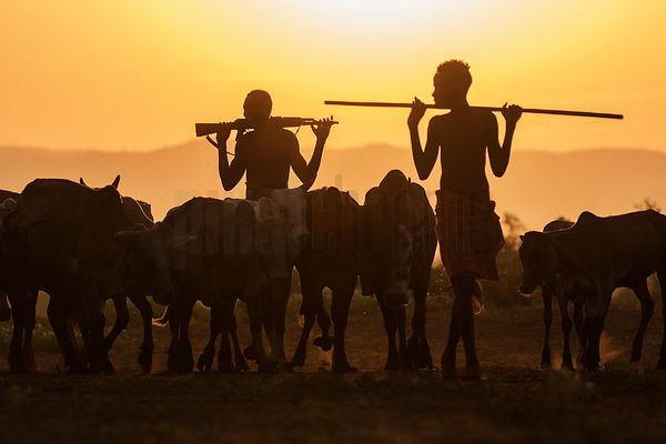 Kara Men Herding Cattle at Sunrise