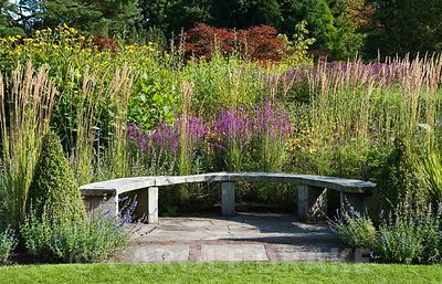 Curved wooden seat backed by grasses and flowering perennials including Lythrum virgatum 'Dropmore Puprle' along the main borders. RHS Garden Harlow Carr, Harrogate, North Yorkshire, UK