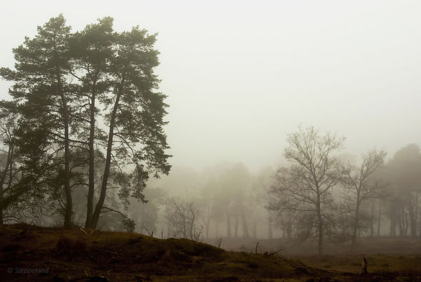 Silent trees in misty land