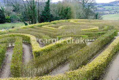 Anniversary maze in shape of 250 planted to mark the 250th birthday of the garden in 1998 in privet. Painswick Rococo Garden, Painswick, Glos, UK