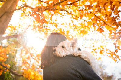 small white dog held by owner in autumn with sunflare