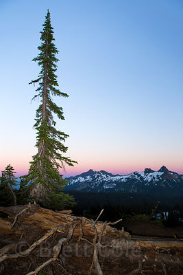 Late light on the Cascades, Mount Rainier National Park, Washington