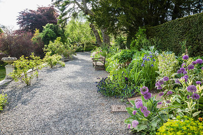 The terrace border is planted with drought tolerant, sun loving specimens including alliums, euphorbias, Cerinthe major 'Pupurascens' and variegated comfrey.