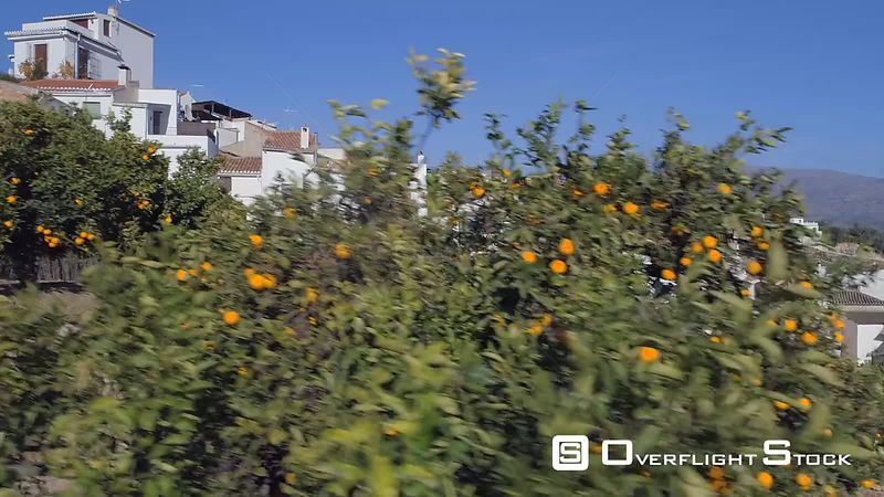 Drone Video Urban Orange Groves Granada Spain