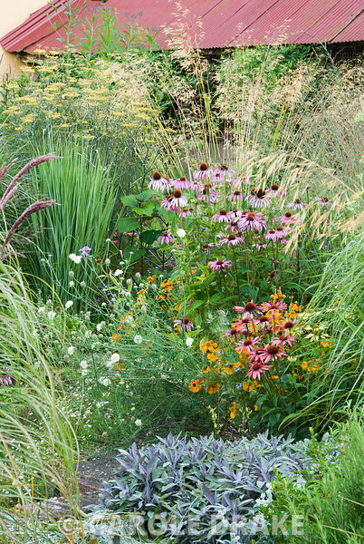 Planting in central circular beds include grasses Stipa gigantea and Panicum 'North Wind' with perennials such as purple sage, Echinacea 'Art's Pride', E. 'Sunrise', E. purpurea, Helenium 'Waldtraut' and Scabiosa columbaria ochroleuca. Broughton Buildings, Broughton, nr Stockbridge, Hants, UK