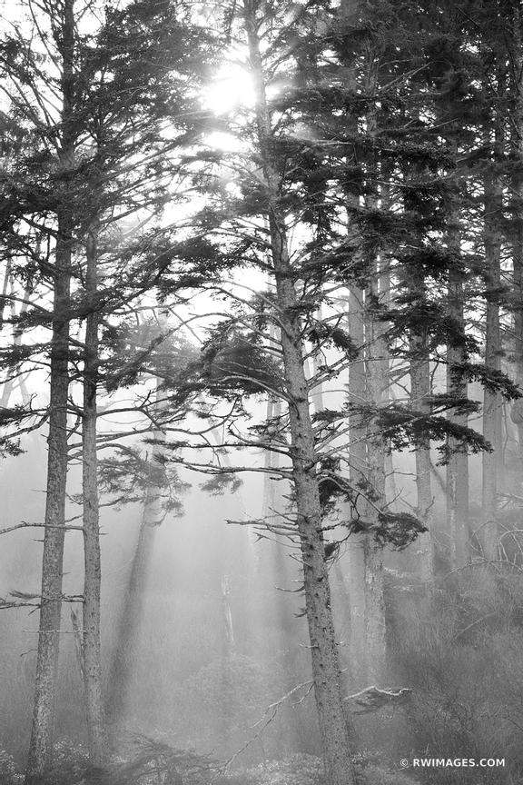 COASTAL FOREST OLYMPIC NATIONAL PARK WASHINGTON PACIFIC NORTHWEST BLACK AND WHITE VERTICAL