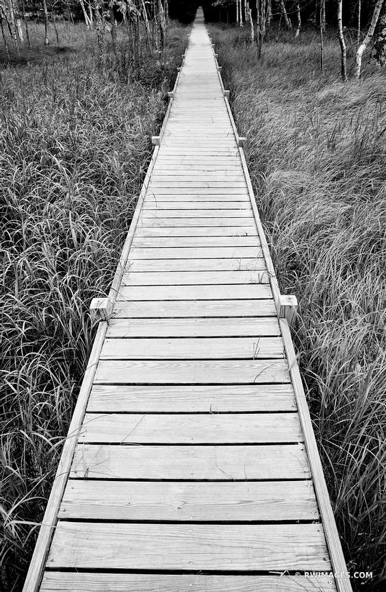 BOARDWALK ON JESUP PATH ACADIA NATIONAL PARK MAINE BLACK AND WHITE