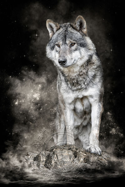 Art-Digital-Alain-Thimmesch-Loup-40
