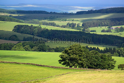 Northumberland Countryside, Hadrian Wall walk.