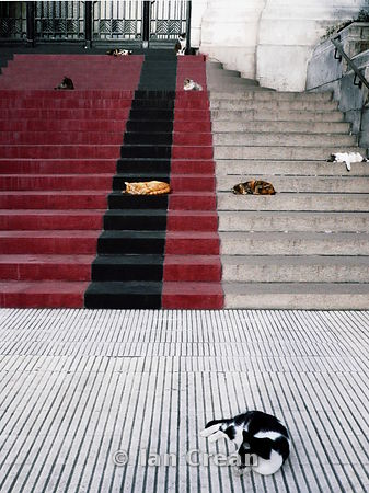 Sleeping Cats On Steps