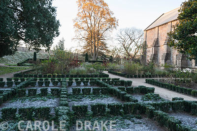 Knot garden planted with euonymus in The East Garden at the Bishop's Palace, Wells in which variously coloured dahlias from the bishop series flower during summer, here frosted on a November morning