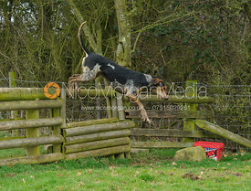 Cottesmore hounds jumping the hunt jump on the Weatherbys'